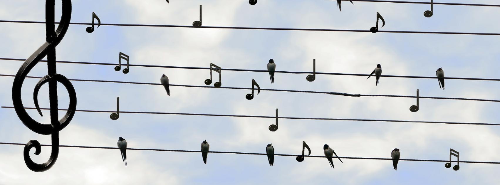 birds-2672101_1920.jpg